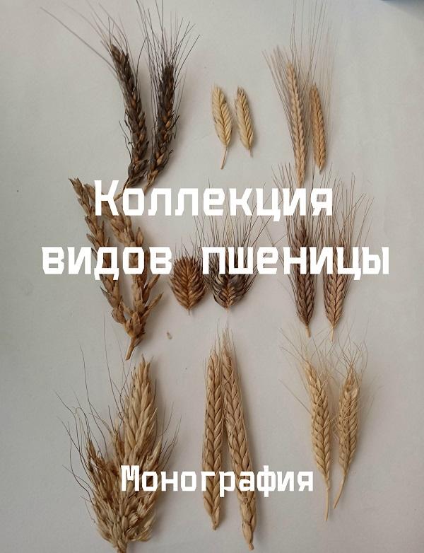 Коллекция видов пшеницы